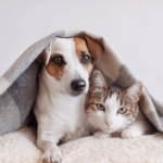 Owning Pets in Bangalore